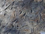 세계최초 원시악어 발자국 화석 발견!