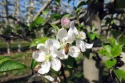 과수 농약 잘못 사용하면 꿀벌 집단폐사 당한다.